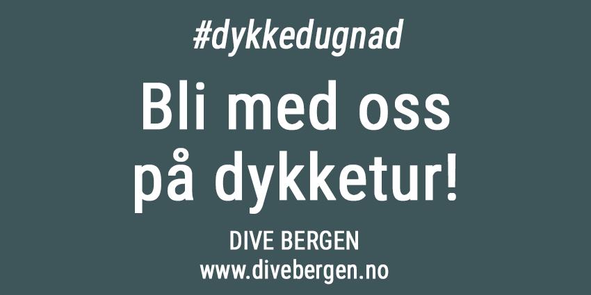 Korona-dykketur-divebergen-850px