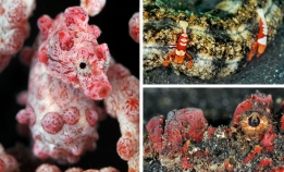 Mucky Secrets – The Marine Creatures of Lembeh Strait